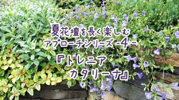 夏花壇を長く楽しむアプローチ シリーズ4