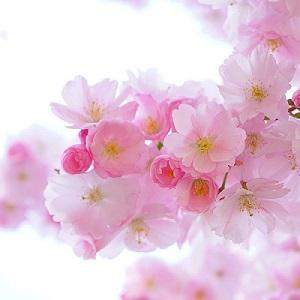 お花をキレイに撮影する方法