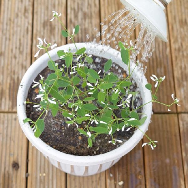 花苗の植え方 苗の植え替え方