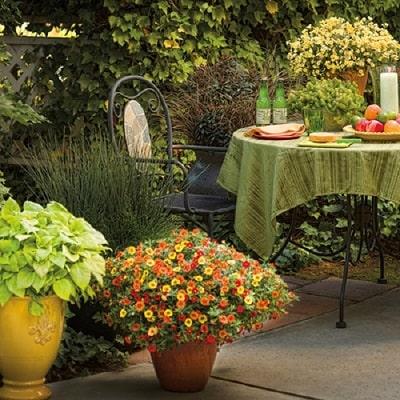肥料やり 花の咲かせ方のポイント