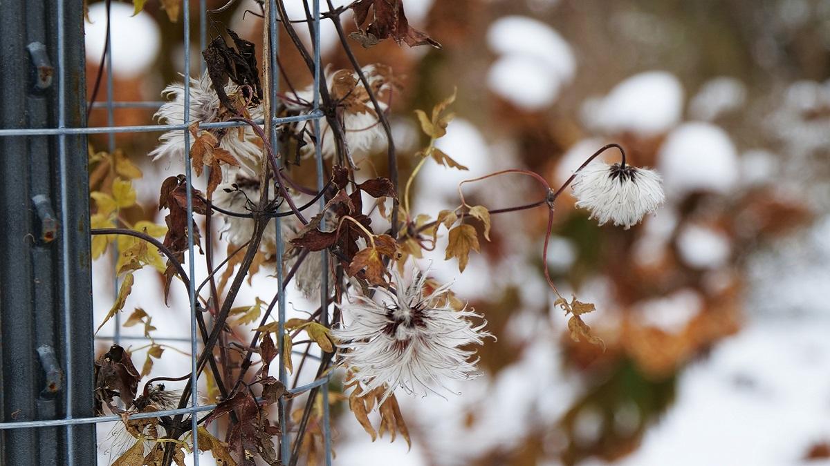 ガーデニング冬越し対策のポイントと冬にやるべき庭仕事
