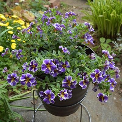 ガーデニング 花を長く楽しむコツ