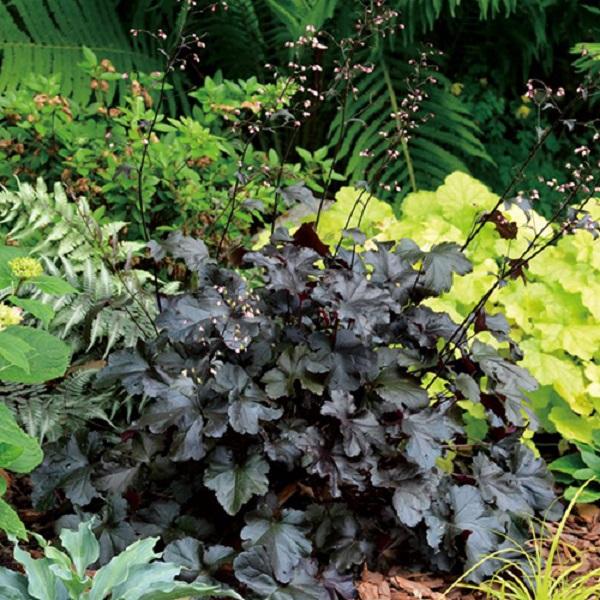 育てる環境に合った植物選び PW