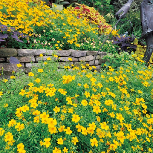 ガーデニング入門 花がたくさん咲く置き場所