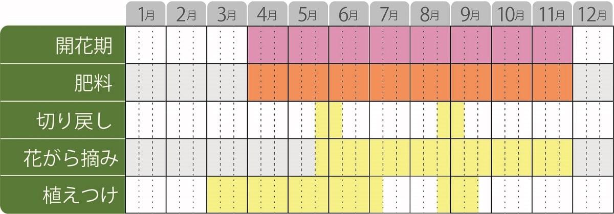 カリブラコアスーパーベル栽培カレンダー