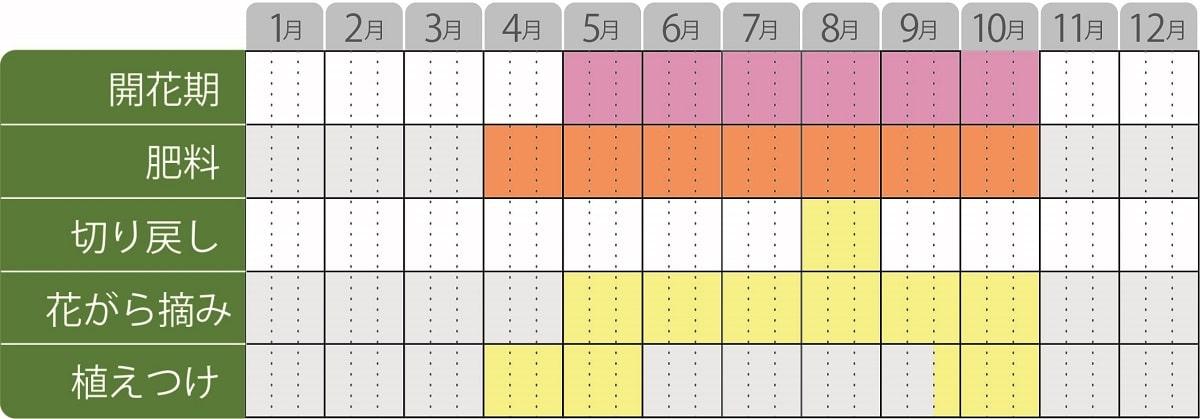 チョコレートコスモスチョカモカ栽培カレンダー