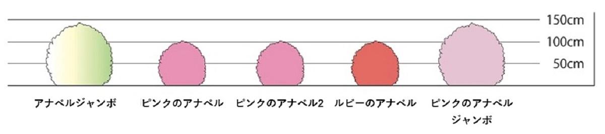 アメリカあじさいピンクのアナベルジャンボ