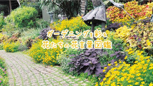 ガーデニングを彩る花たちの花言葉