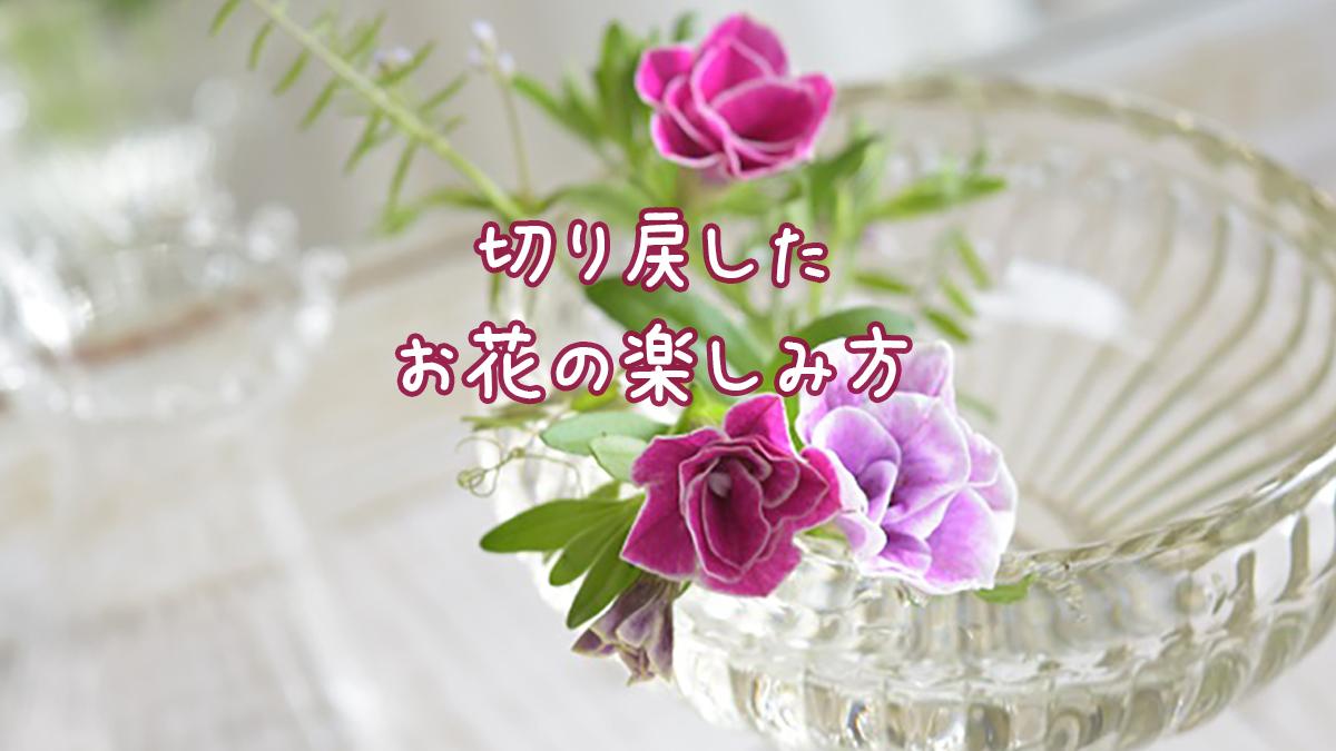 切り戻したお花の楽しみ方