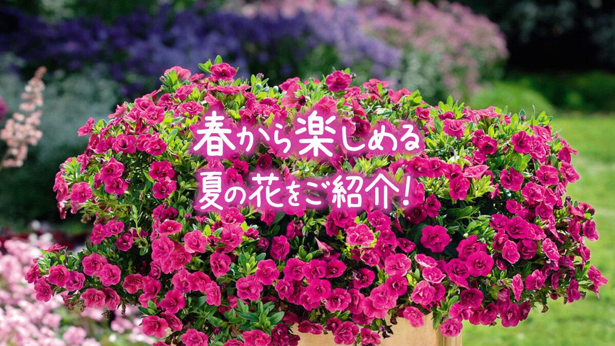 春から楽しめる夏の花をご紹介