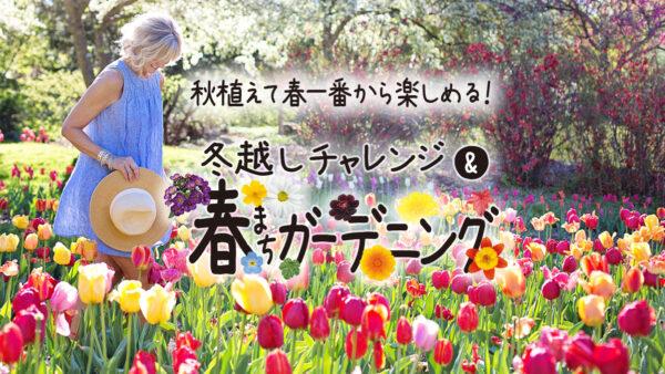 秋植えて春一番から楽しめる!春まちガーデニング