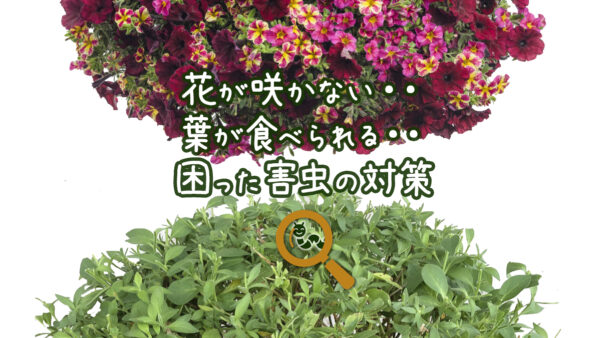 花が咲かない!葉が食われる!ガーデニングの困った害虫対策