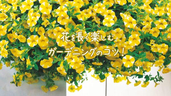 花を長く楽しむガーデニングのコツ