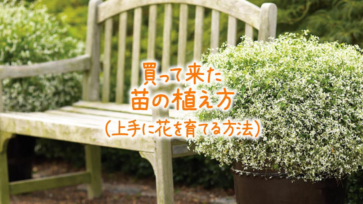買ってきた苗の植え方(上手に花を育てる方法)