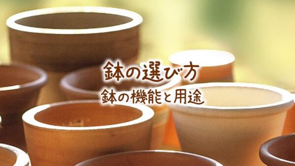 鉢の選び方 鉢の種類と用途