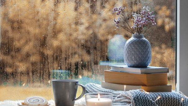 雨のガーデニング対策!梅雨越し・長雨越しのポイント!