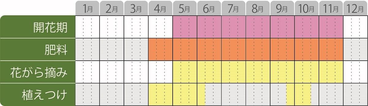 スーパーサルビアロックンロール栽培カレンダー
