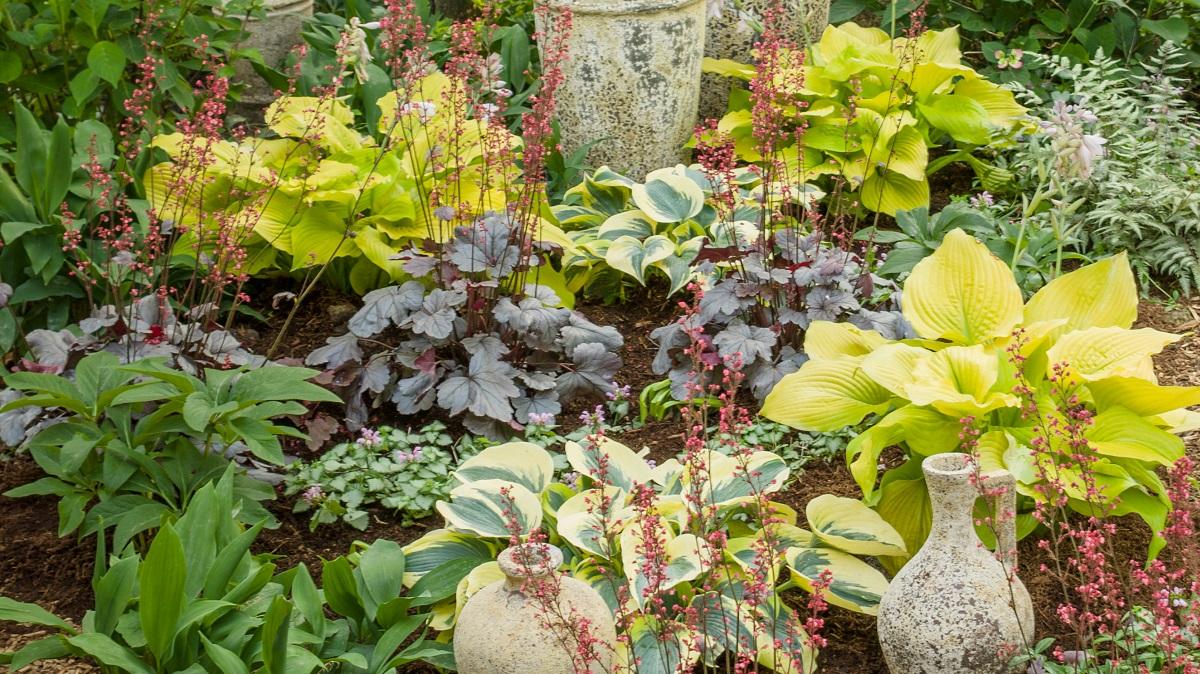 カラーリーフでお手入れ簡単な庭づくりを