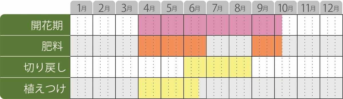 ヘリオトロープブライドブルー栽培カレンダーハーブ
