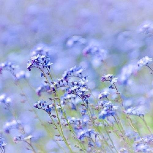 ブルーガーデン 青い花