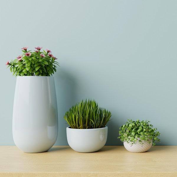 観葉植物インテリアグリーン鉢の選び方