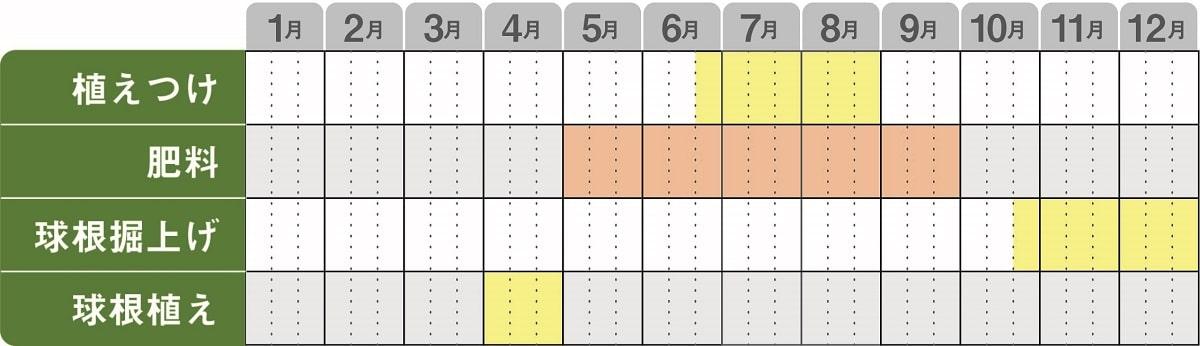 ガーデンカラジウム栽培カレンダー