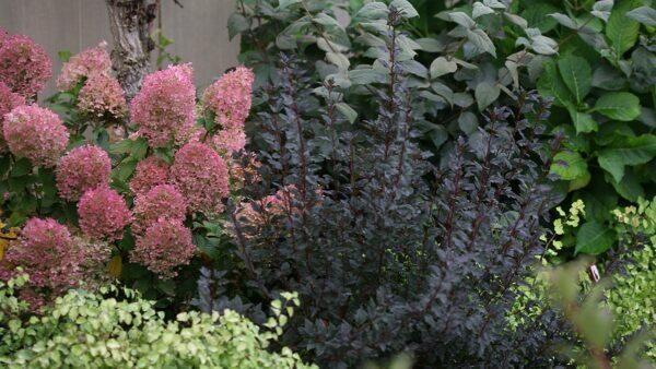 シェードガーデンにおすすめの庭木!日陰の庭で育つ木13選
