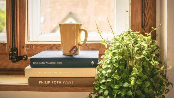 観葉植物で癒しを おすすめグリーンインテリア6選