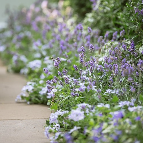 青い花 ブルーガーデン