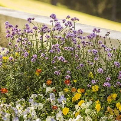 一年中花が咲くおしゃれな花壇を作るポイント