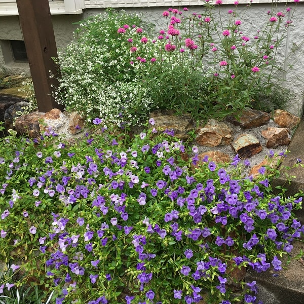 夏花壇の植え方
