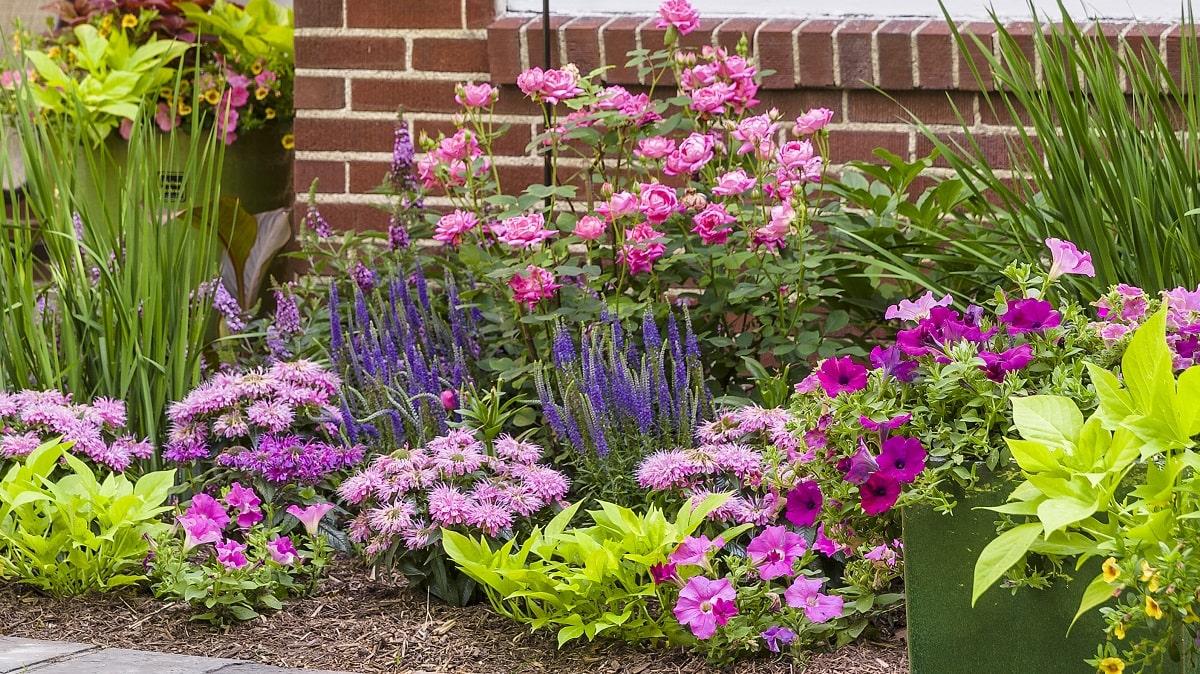 花が咲かないたくさんの花を咲かせる方法