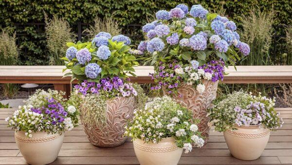 鉢植えでアジサイを育てる方法