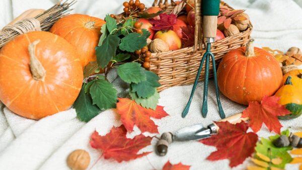 ハロウィンはかぼちゃで花瓶(パンプキンベース)を作ってみよう